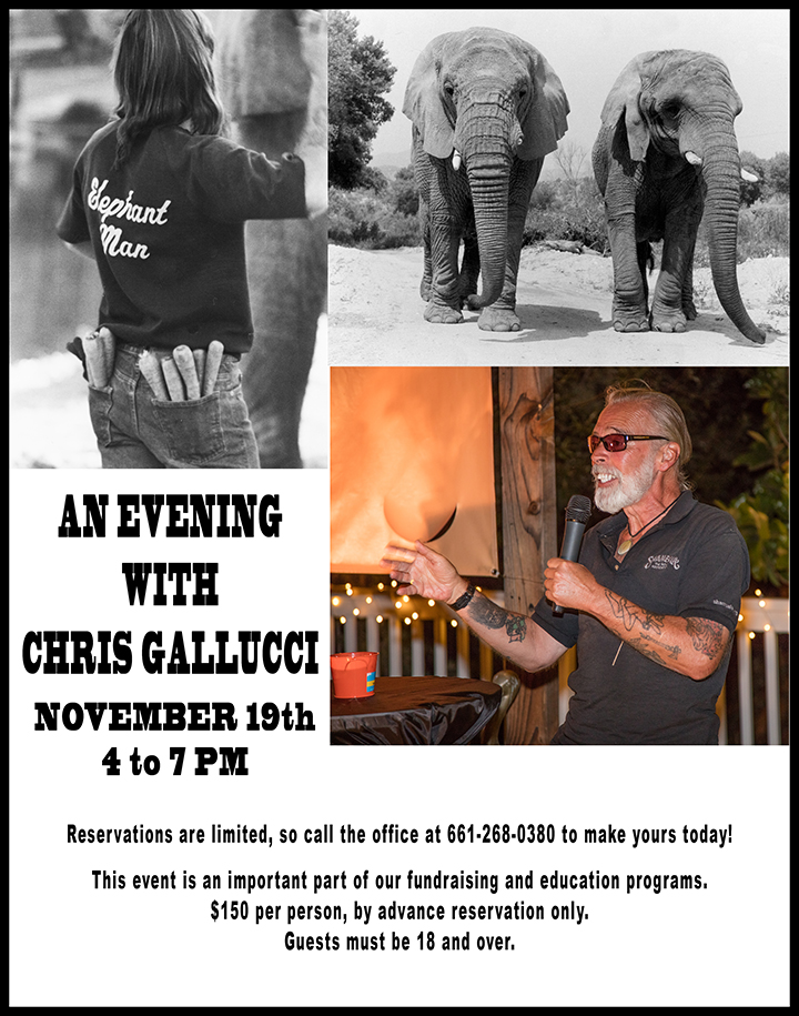 An Evening with Chris Gallucci Nov 19 661-268-0380